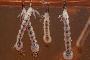 Muỗi xuất hiện nhiều nhất vào thời gian nào?
