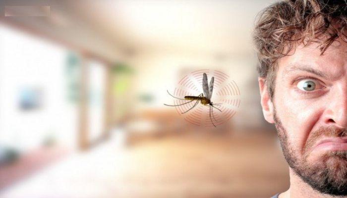 Sự khác nhau giữa sốt xuất huyết Ebola và sốt xuất huyết dengue